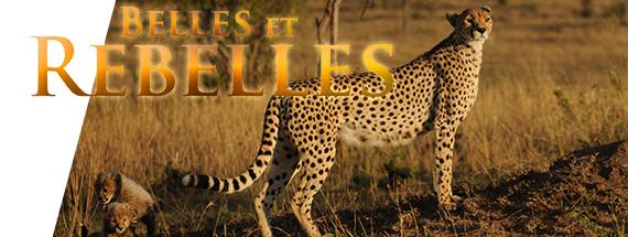 Belles et rebelles – Coffret 3 DVD